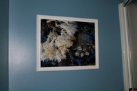 "Special Enlargement Orders - This is a 16x20 of ""White Seaweed"""